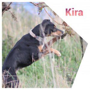Kira, Ratonero, * 01.2015