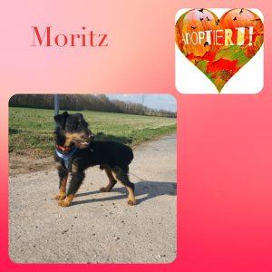 Moritz, Deutscher Jagdterrier,*06.2017, 9,5 kg