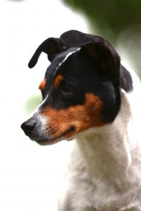 Rosali, Bodeguera, 5-6 Jahre