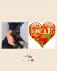 Chin Chan de la finca, , *08.2013