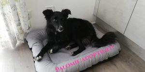Palomi de la finca,  Spanischer Schäferhund Mix, *12.2017. 18.kg