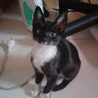 Unsere Katzen!❤️