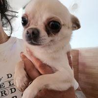 Paloma, Chihuahua, *03.08.2016