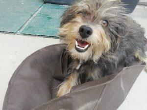 Nessy, Yorki Mix, 11 Monate, ca. 5kg