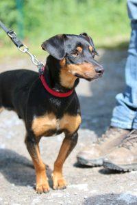 Budy , Mischling, ca *2 Jahre , 10kg, PS Niederösterreich ,Zuhause gesucht❣️
