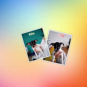 Rita und Judy, * 01.08.2021 Bodeguero Mischlinge